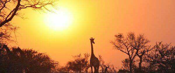Educational Student Tours to Zambia with Worldwide Navigators