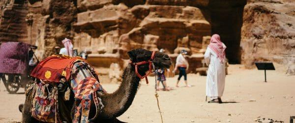 Animal Science Studies in the UAE with Worldwide Navigators
