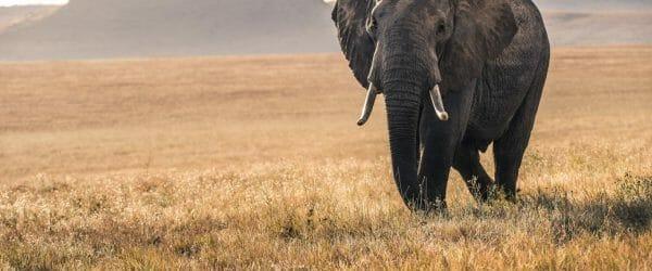 Animal Science Tour in Kenya with Worldwide Navigators