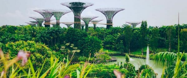 Study Botany in Singapore with Worldwide Navigators