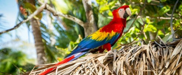 Study Ecotourism in Central America with Worldwide Navigators