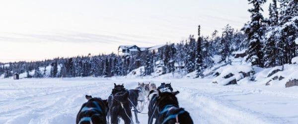 Study Animal Sciences in Sweden with Worldwide Navigators