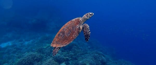 Study Marine Conservation in Central America with Worldwide Navigators